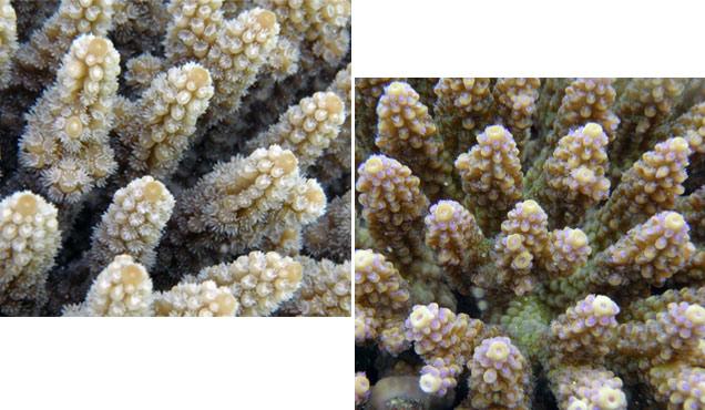 sn-corals