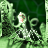 Believing_Bacteriophage_160x160