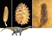 sn-pinecones-thumb-200xauto-5498