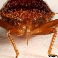 _55015047_bedbug3stack02aw